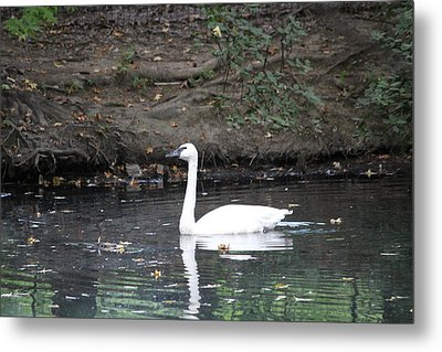 Reflecting On Grace Metal Print