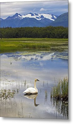 Reflecting Swan Metal Print by Saya Studios