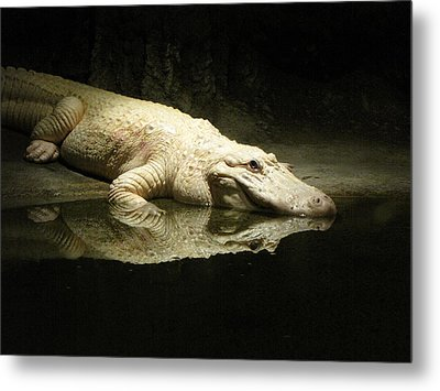 Metal Print featuring the photograph Reflection by Beth Vincent