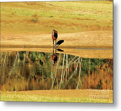 Metal Print featuring the photograph Reflection by Carol Lynn Coronios