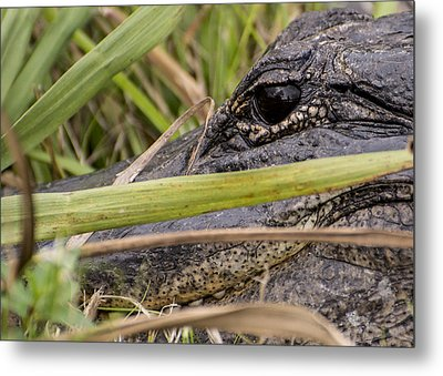 Reflection In His Eyes Metal Print by Penny Lisowski