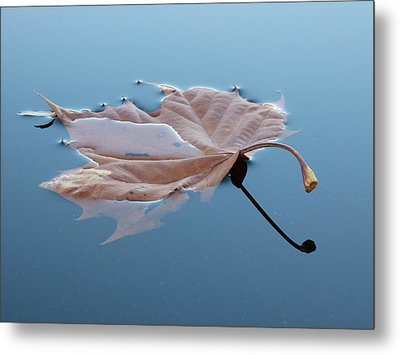 Reflection Metal Print by Jane Ford