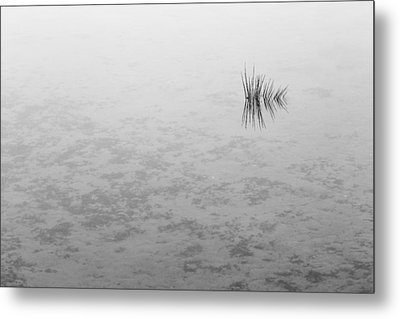 Reflection Metal Print by Lee Harland