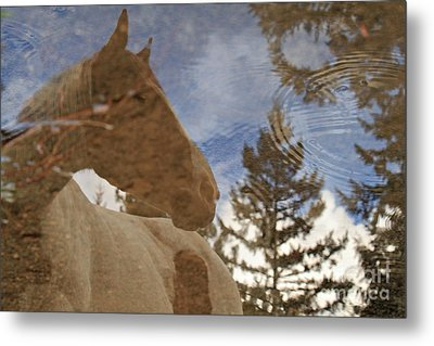 Upon Reflection Metal Print by Michelle Twohig