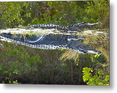 Reflection Metal Print by Wild Expressions Photography