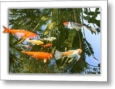 Reflections In A Koi Pond Metal Print by Mariarosa Rockefeller
