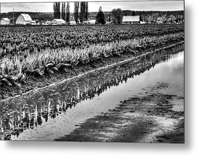 Reflections In Black And White Metal Print by Brian Xavier