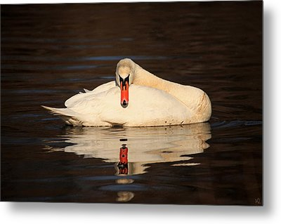 Reflections Of A Swan Metal Print by Karol Livote