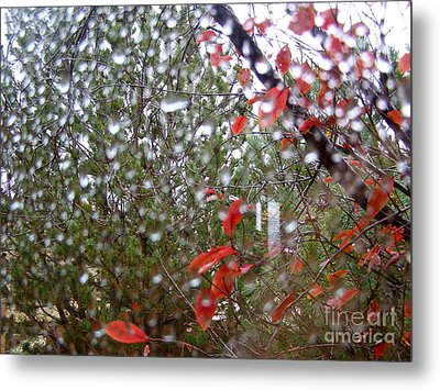 Reflections Of Rain Metal Print