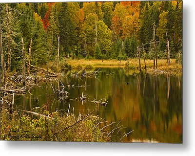 Reflections Of The Fall Metal Print