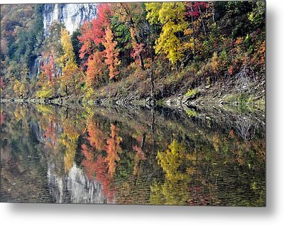 Reflections On The Buffalo Metal Print by Marty Koch