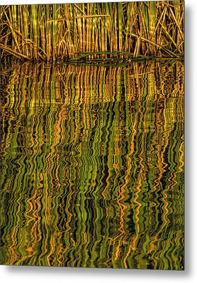 Metal Print featuring the photograph Reflections by Rob Graham