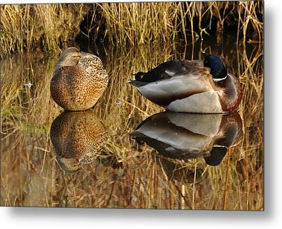 Metal Print featuring the photograph Reflections by Sabine Edrissi
