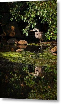 Reflective Heron Metal Print by Sylvia J Zarco