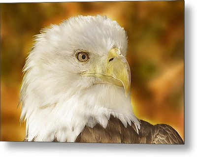 Metal Print featuring the photograph Regal Eagle  by Brian Cross