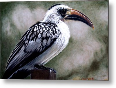 Regal Hornbill Metal Print