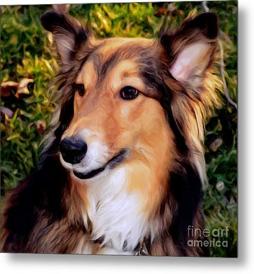 Metal Print featuring the photograph Dog - Collie - Regal Shelter Dog by Luther Fine Art
