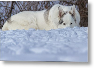 Relaxing In The Snow Metal Print