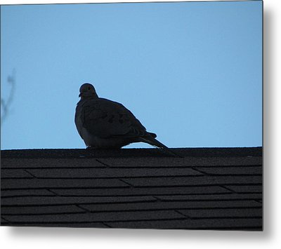 Relaxing On The Roof Metal Print by Rickey Rivers Jr