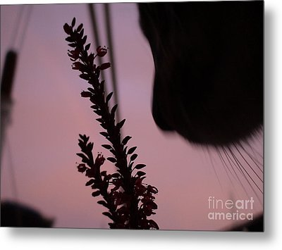 Metal Print featuring the photograph Remember Me by Laura  Wong-Rose