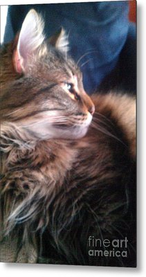 Metal Print featuring the photograph Remembering Bo by Jacqueline McReynolds