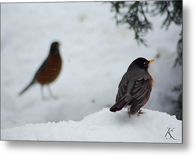 Reminiscing Robin Metal Print