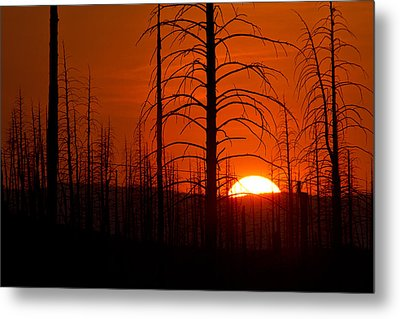 Requiem For A Forest Metal Print by Jim Garrison