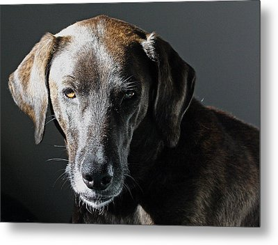 Rescue Dog - Osa Metal Print by Peggy Collins