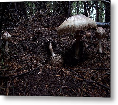 Residents Metal Print by Steve Battle