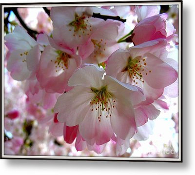 Resplendent Metal Print by Patti Whitten