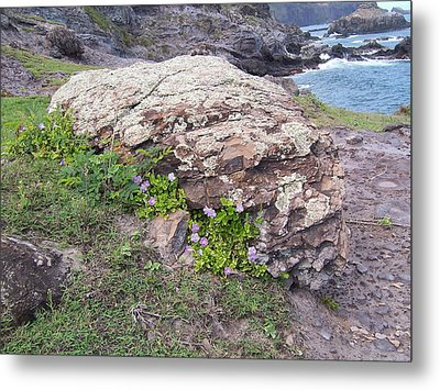 Metal Print featuring the photograph Restful Outlook by Sheila Byers