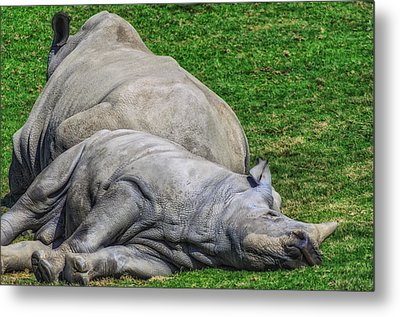 Restful Rhinoceros Metal Print by Camille Lopez
