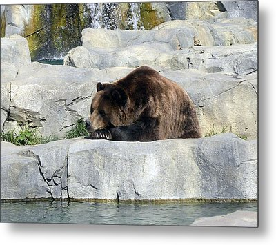 Metal Print featuring the photograph Resting Bear by Teresa Schomig