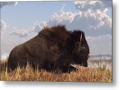Resting Bison Metal Print by Daniel Eskridge