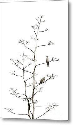 Resting Doves Metal Print