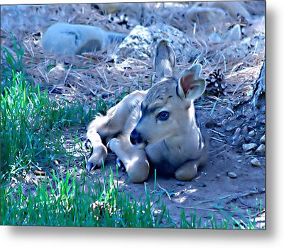 Resting Fawn Metal Print by Rebecca Adams