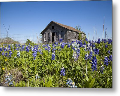 Resting In A Field Of Blue Metal Print