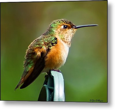Resting Peaceful Metal Print
