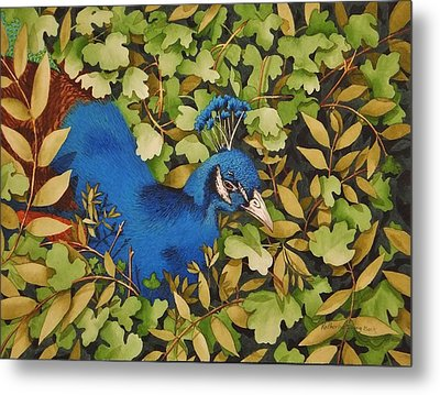 Resting Peacock Metal Print by Katherine Young-Beck