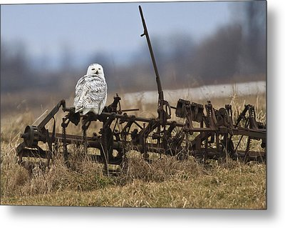 Metal Print featuring the photograph Resting Place by Gary Hall
