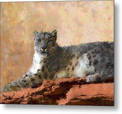 Resting Snow Leopard Metal Print by Roger D Hale