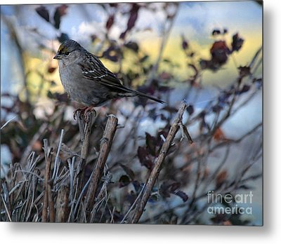 Metal Print featuring the photograph Resting Sparrow by Marjorie Imbeau
