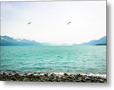 Resurrection Bay With Sea Gulls Metal Print