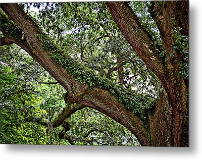 Metal Print featuring the photograph Resurrection Fern by Linda Brown