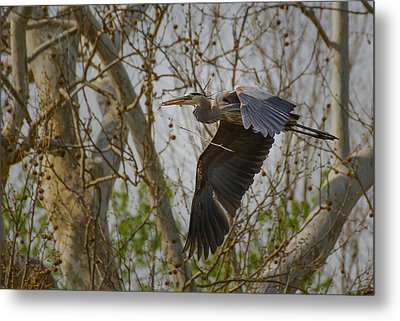 Return Flight Metal Print