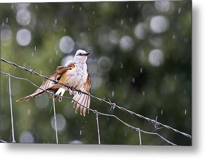 Revelling In The Rain Metal Print by Annette Hugen