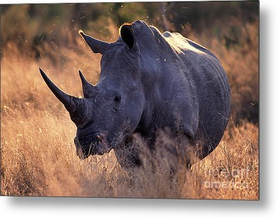 Metal Print featuring the photograph Rhino by Michael Edwards