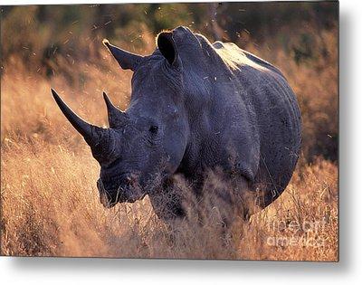 Rhino Metal Print by Michael Edwards