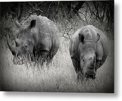 Rhinos Metal Print