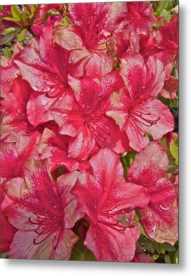 Metal Print featuring the photograph Rhododendron Closeup by Todd Kreuter